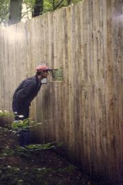 Ein Yano im Busch